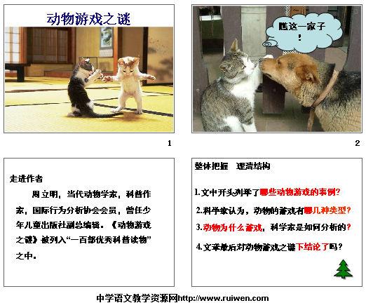 动物游戏之谜 课件截图