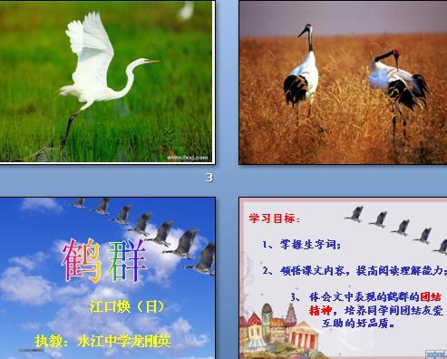 由鹤群图片引出课题,从鹤群翔空