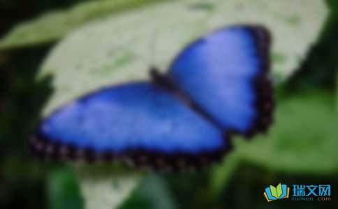 蝴蝶飞了作文