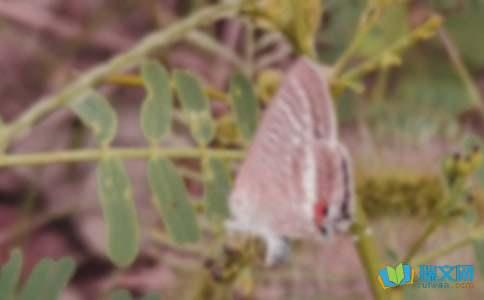 蝴蝶泉的传说典故