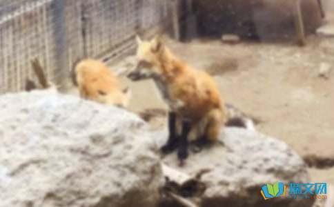 狐狸与山羊(故事)