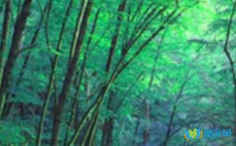森林深处作文300字(精选5篇)