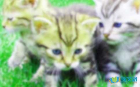 """描写小猫的作文:心爱的吃货""""眯眯"""""""