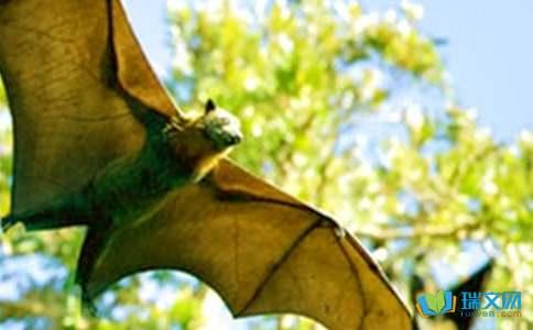 蝙蝠的烦恼作文